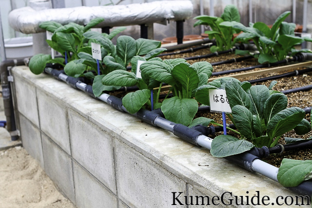Water Cooled Plants