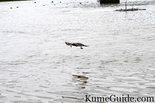 Black bird with prawns