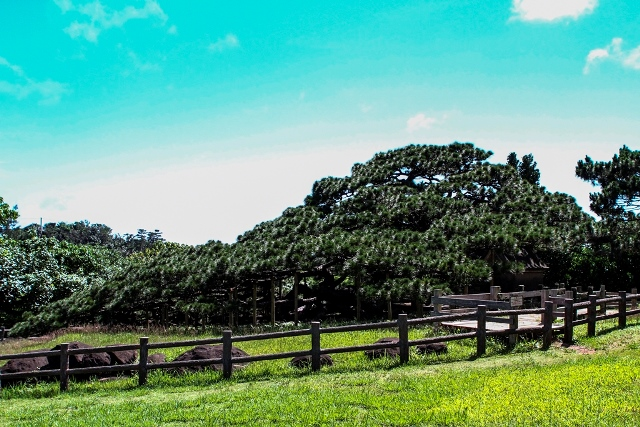 Tree walkway