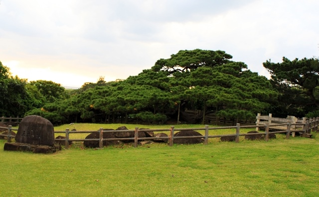 Go-e Matsu Tree