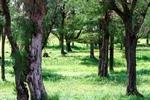 Shinri Forest