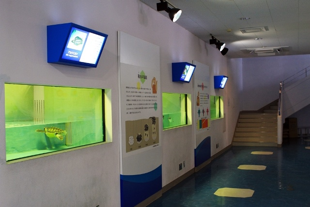 A Turtle House Exhibit